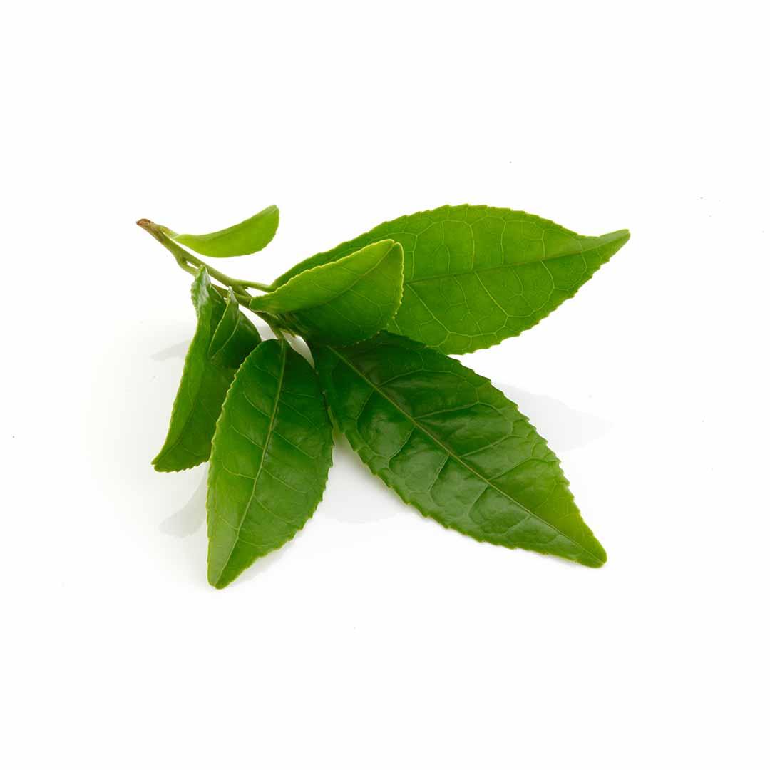 hushandhush-deeplyrooted-koostis-roheline-tee