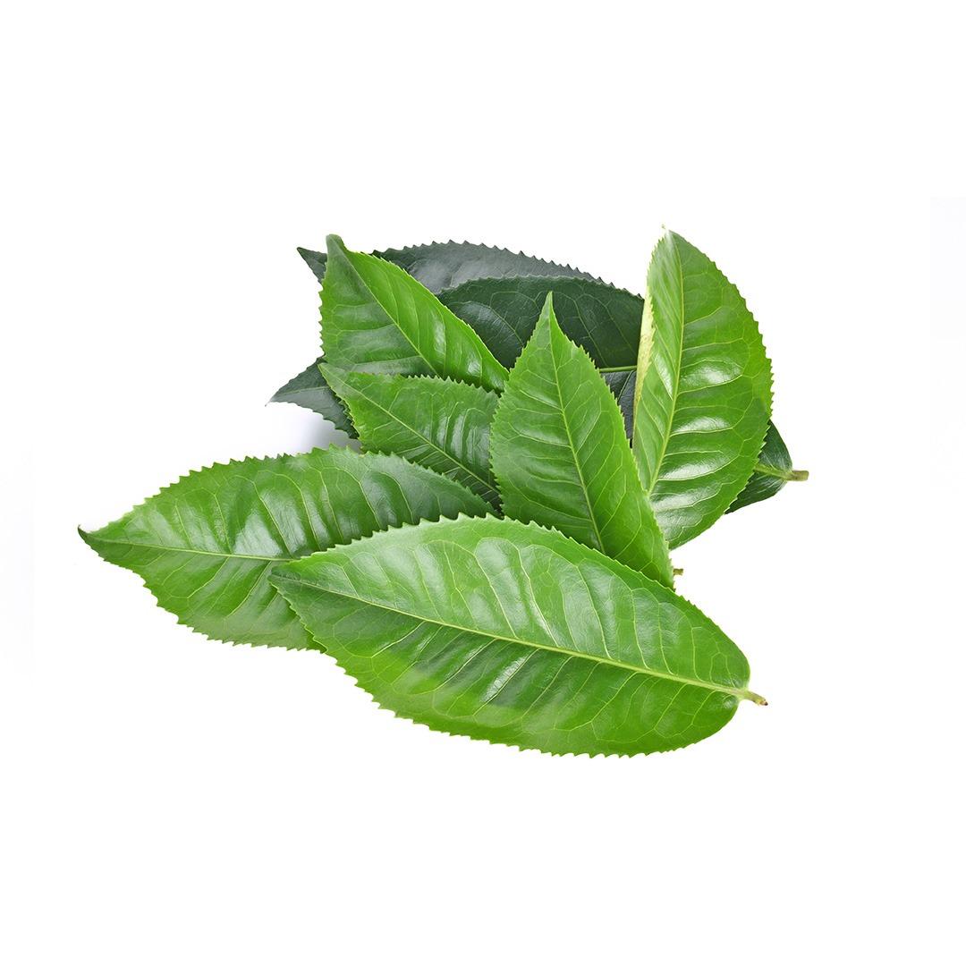 hushandhush-skincapsule-brighten-koostis-rohelise-tee-ekstrakt
