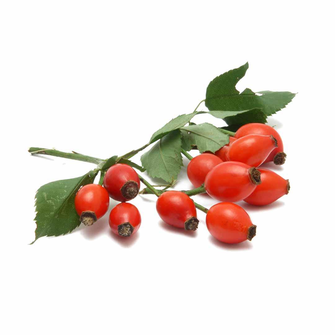 hushhush-plant-your-day-koostis-kibuvits