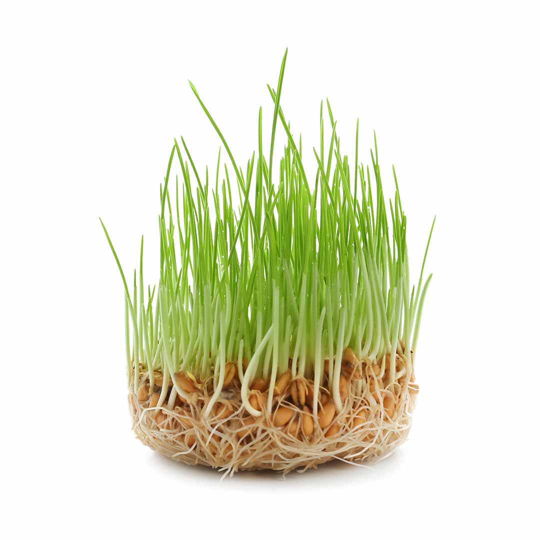 hushhush-plant-your-day-koostis-orgaaniline-nisuoras