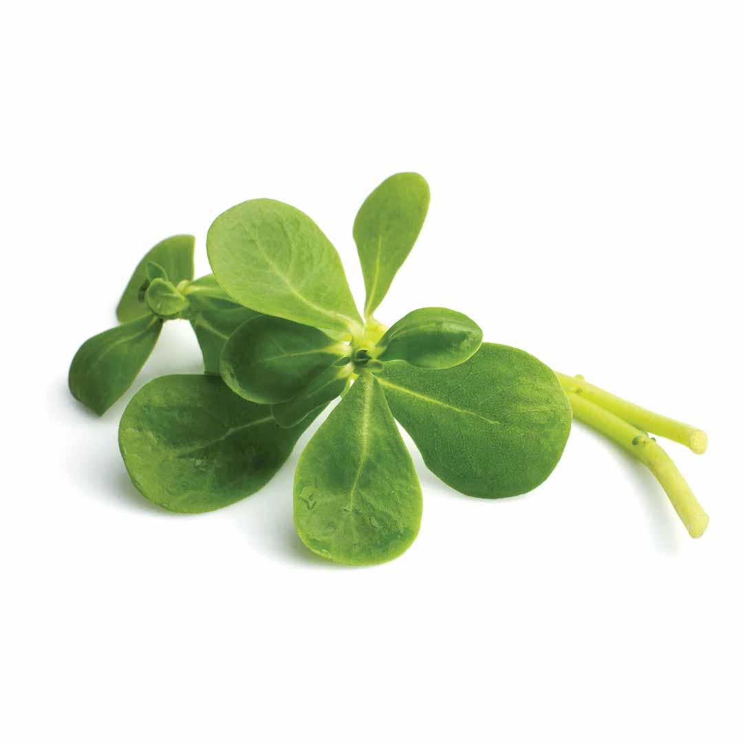 hushhush-plant-your-day-koostis-orgaaniline-portulak