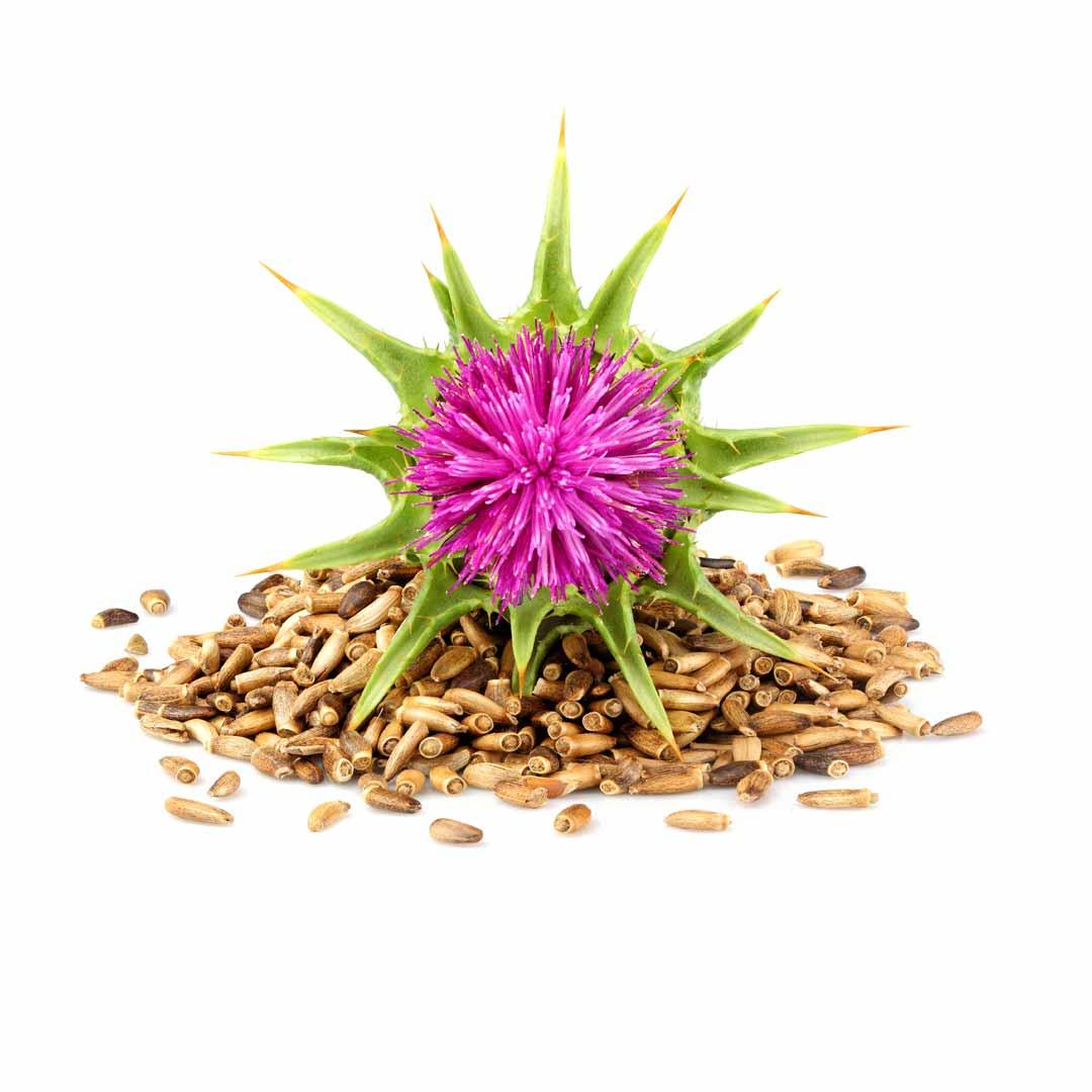 hushhush-plant-your-day-koostis-piimohaka-seeme