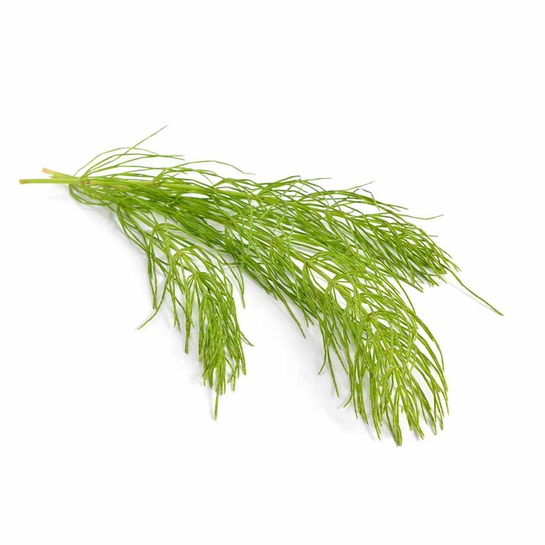 hushhush-plant-your-day-koostis-poldosi