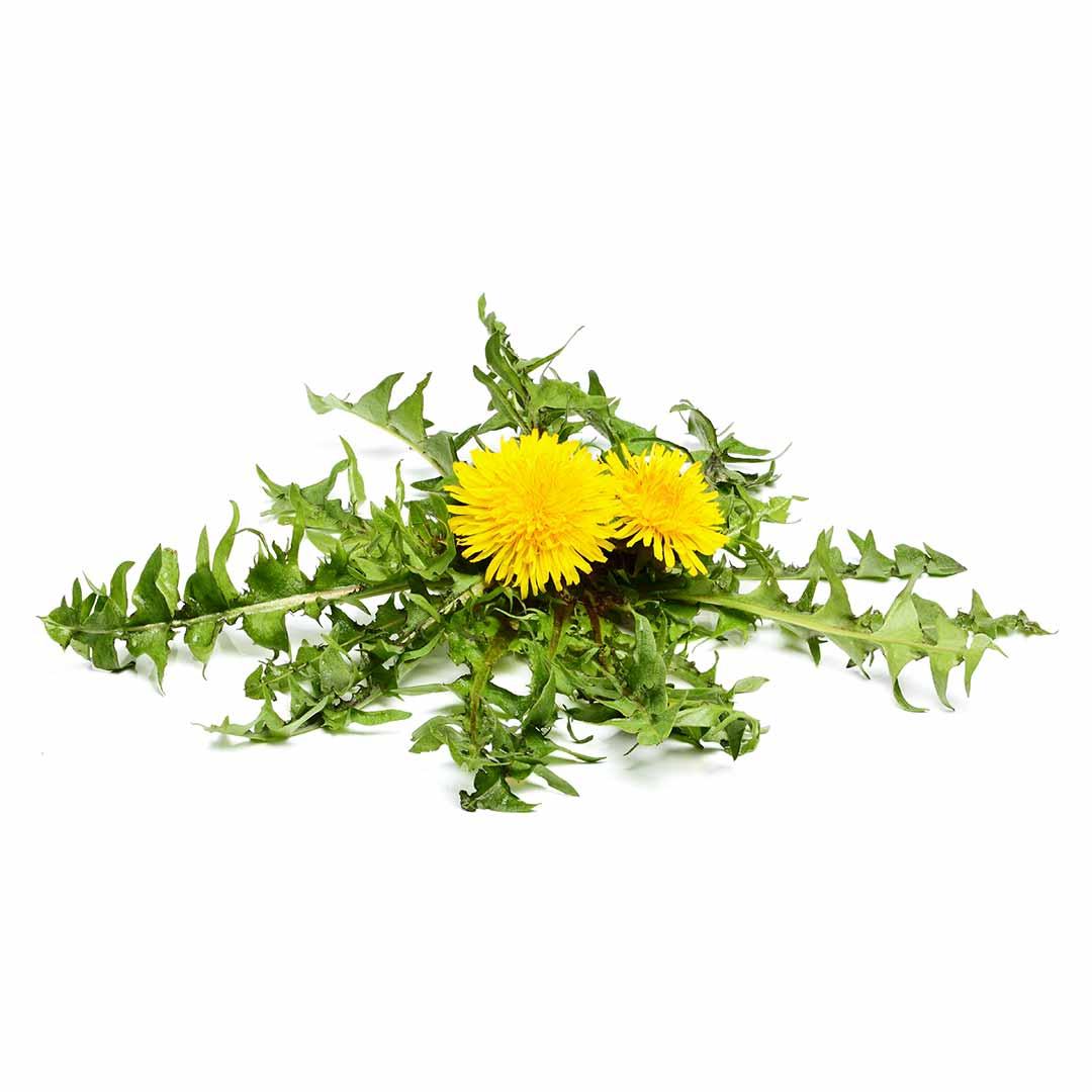 hushhush-plant-your-day-koostis-voilille-juur